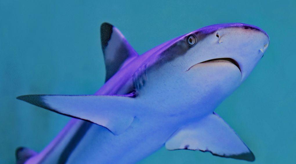 Рыбак дал отпор акуле, что схватила его за ногу