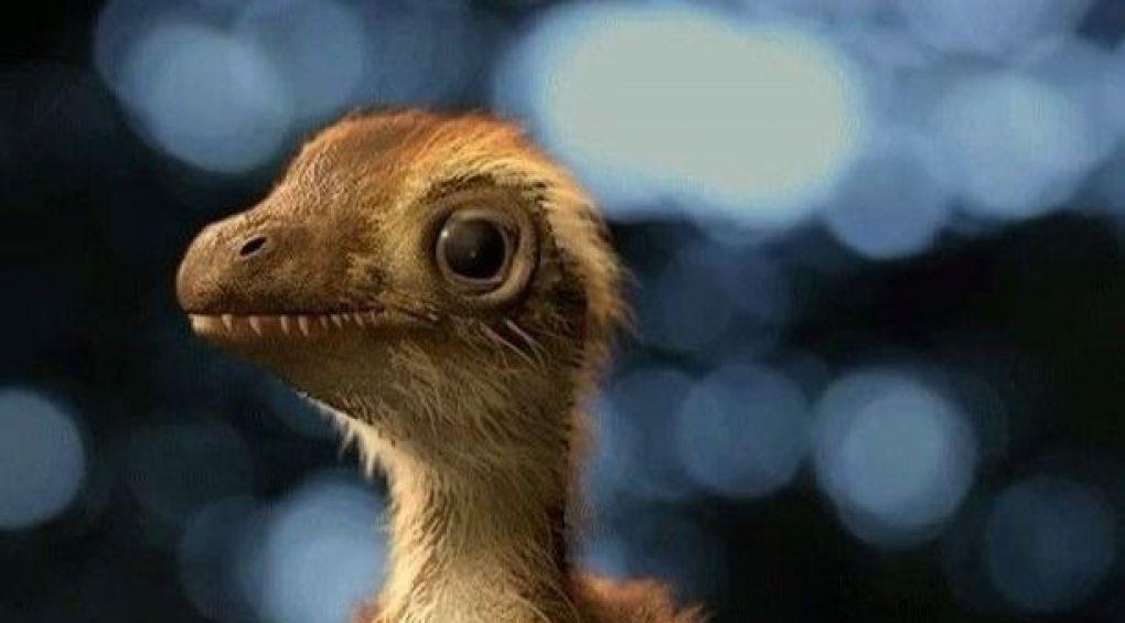 Как выглядел детеныш тиранозавра?