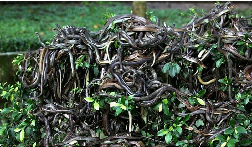 зміїний острів
