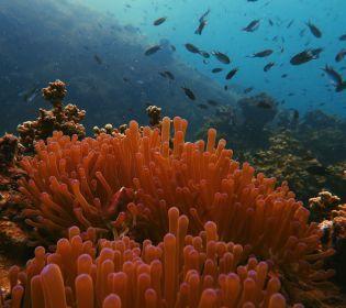 Новини з паралельної реальності: в Австралії курсуватиме підводне таксі