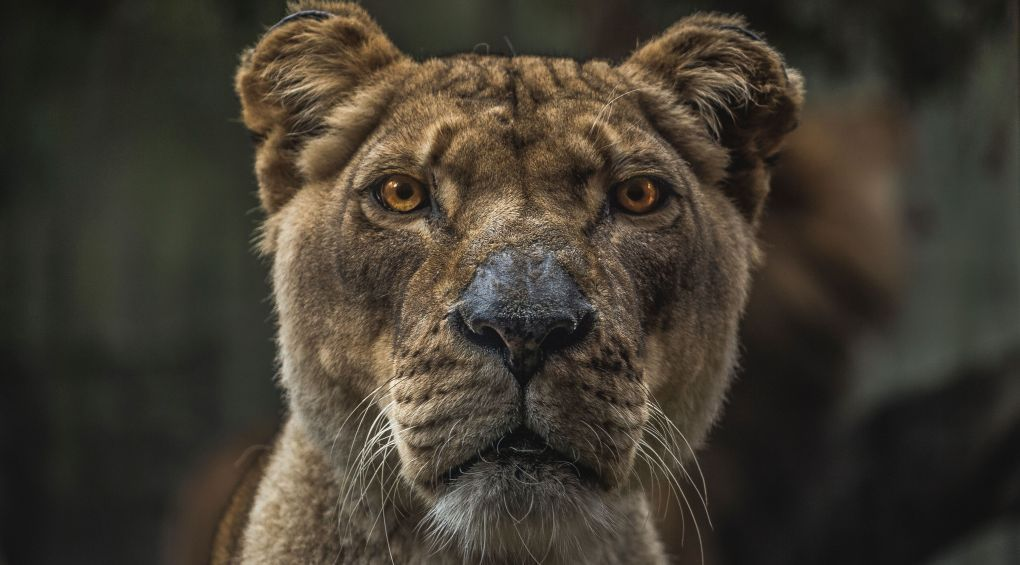 7 дивовижних тварин, про існування яких ви не здогадувалися