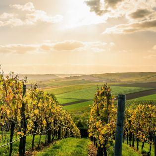 В аэропортах Грузии туристам будут дарить вино