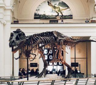 Паща, немов качиний дзьоб: У США виявили новий вид динозаврів (фото)