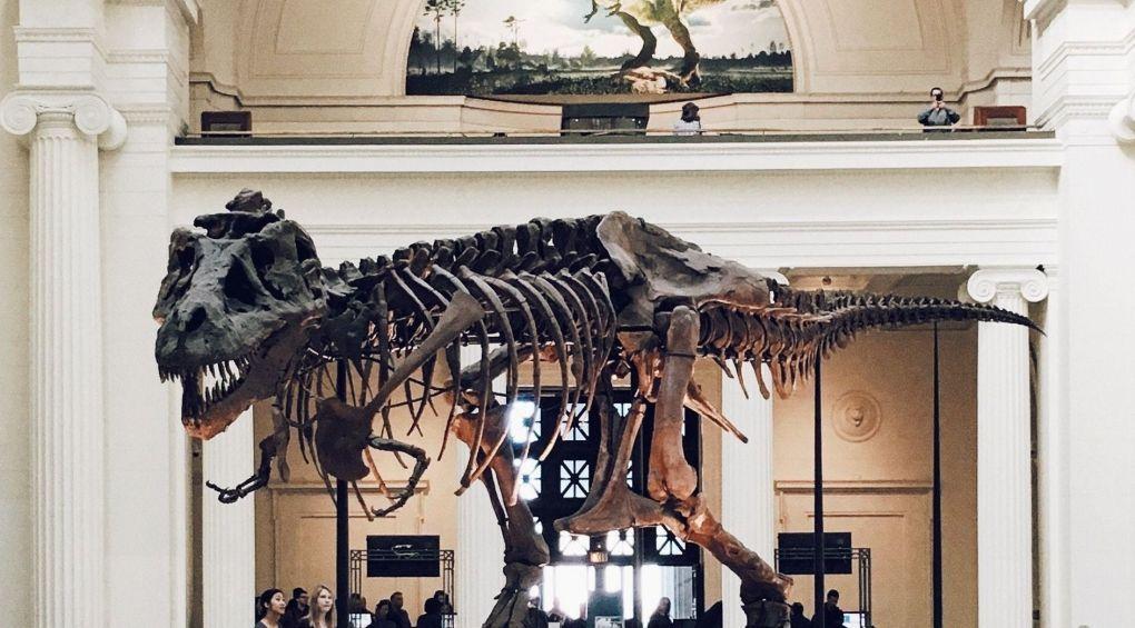 Пасть, словно утиный клюв: В США обнаружили новый вид динозавров (фото)