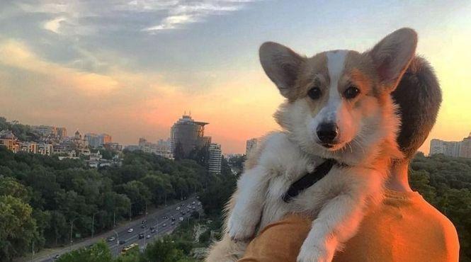 Як виглядає Київ очима Коргі (миле відео)