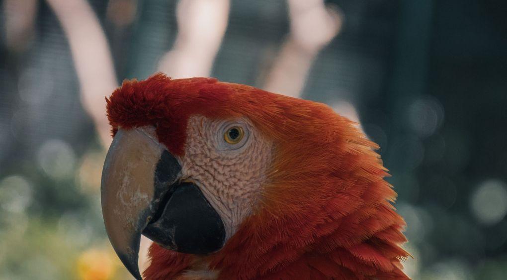 Доисторические попугаи достигали метра (фото)