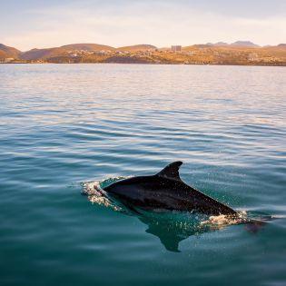 Туристам в Новой Зеландии запретили плавать с дельфинами
