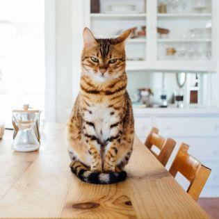 Комендантский час для котов: Зачем в австралийском городе ввели странное правило