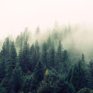 Земля ежегодно теряет лесные участки площадью, как Великобритания