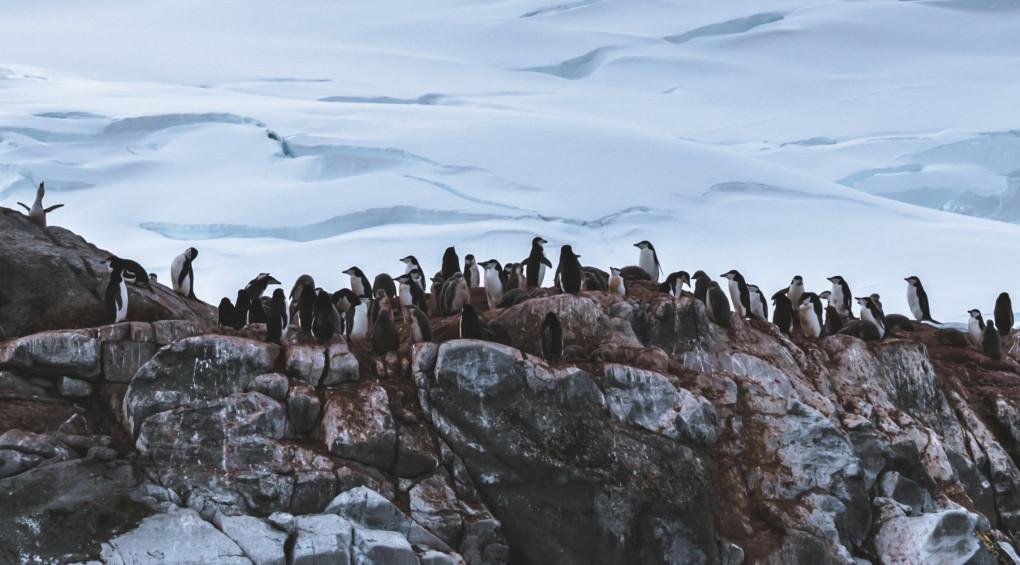 Сервіс Airbnb шукає 5 добровольців для досліджень Антарктиди