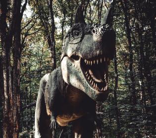 І таке буває: В Австралії вперше знайшли рештки пернатого динозавра (фото)