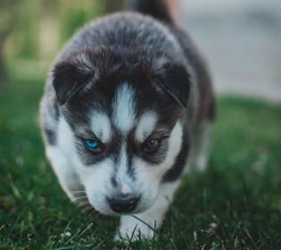 Новая звезда: В сети обсуждают фото щенка-единорога