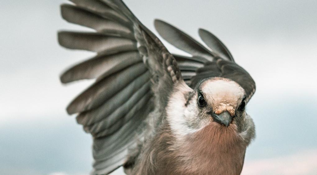 Как выглядела одна из древнейших птиц (фото)