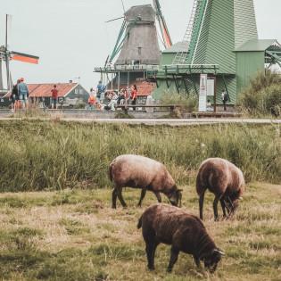 В Нидерландах появится набережная, которая изменит русло реки