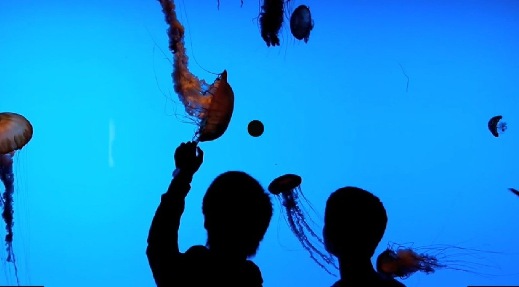 ТОП найдивовижніших загадок морів та океанів