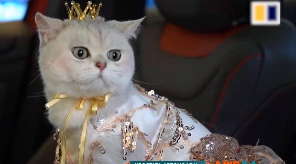 В Японии кошка стала самой дорогой моделью на авто-шоу