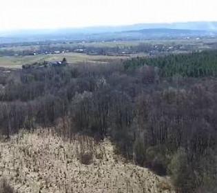 Елка за 248 тысяч гривен: власти планируют «Большое садоводство»