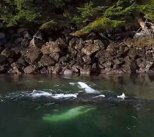 Чоловік опинився у пащі кита і вижив