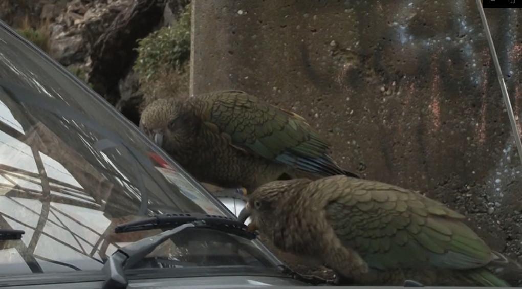 Птахи атакують: крилаті все частіше нападають на людей