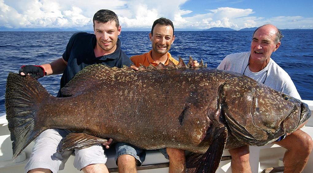 ТОП-9 гигантских морских рыб, пойманных человеком