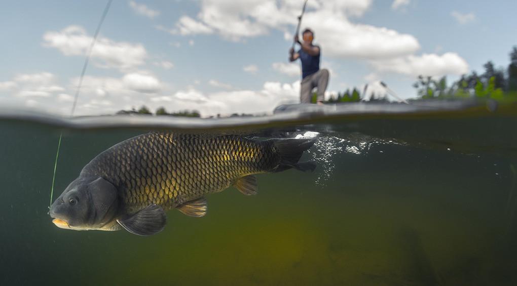 Всемирный день рыболовства: история и особенности праздника
