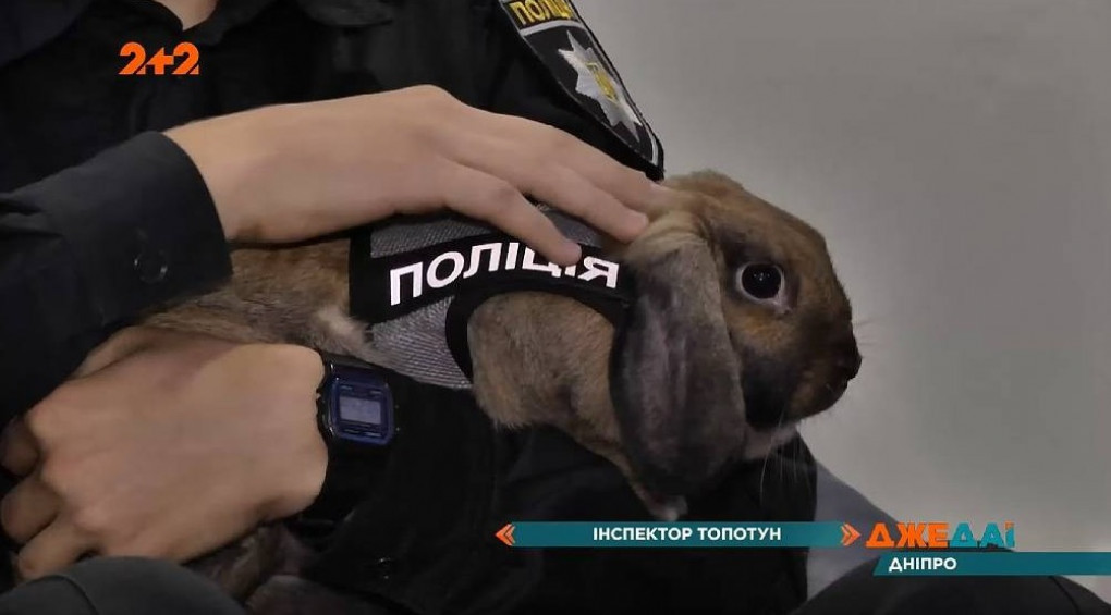 Кролик-поліцейський: у Дніпрі з'явився вухастий коп – інспектор Топотун