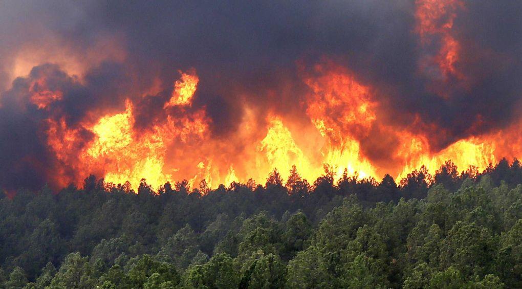 """Про небезпеку лісових пожеж у літню спеку розкаже програма """"Страшне завтра"""""""